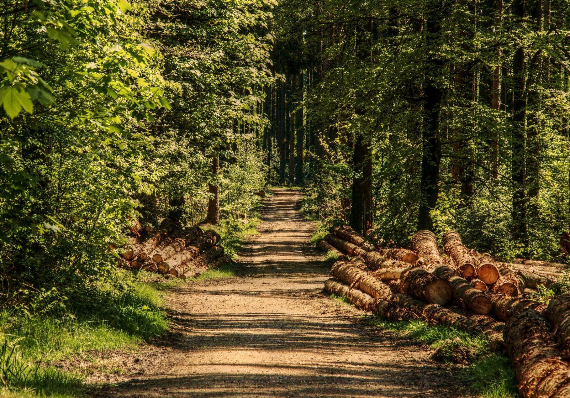 forestry scheme