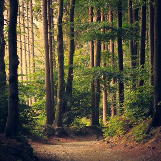 Forestry Schemes such as Ethical Forestry Ltd