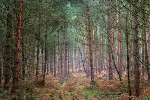 East midlands forest